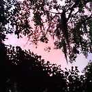 5th of 5 from last eve - pink cloud through Spanish moss by Nadia Korths