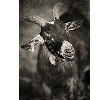 Baa Photographic Print