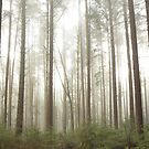 mist in the trees, Pacific Spirit Park, Vancouver, British Columbia, Canada by Christopher Barton