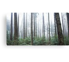 mist in the trees, Pacific Spirit Park, Vancouver, British Columbia, Canada Canvas Print