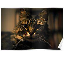 James the Cat - Portrait - 2 Poster