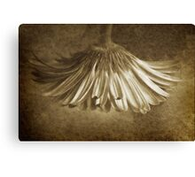 Vintage Gerbera ~ No 2 Canvas Print