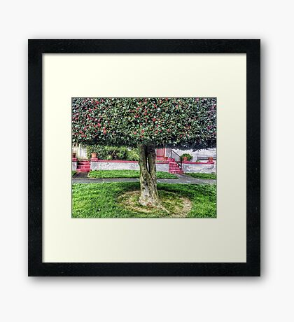 Seattle front yard Framed Print