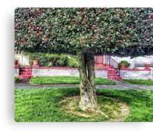 Seattle front yard Canvas Print