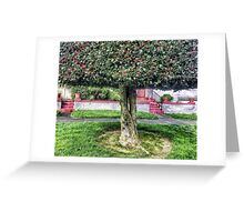 Seattle front yard Greeting Card