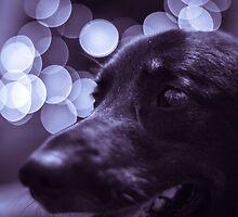 Trixie the Dog - Portrait - 1 by RHeavenridge