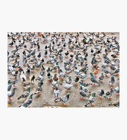 the pigeons2 Photographic Print
