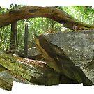Kakadu NP by Glenn Browning