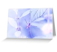Spider Dreams Greeting Card