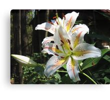 Glorious Lilies! Canvas Print