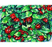 Ladybugs in the Hedge Photographic Print