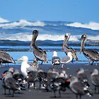 March of Pelicans by Hiroshi  Maeshiro