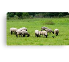 Sheep in the Fields Canvas Print