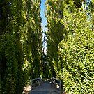 Tea Tree Lake Avenue by Leanne Nelson