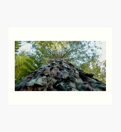 Tree Trunk Art Print