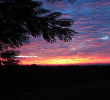 Sunrise from Patio...3 by Frandiana