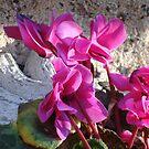 Pink Flower by LightStar