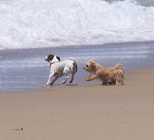 Playful Beach Pair by Rochelle Buckley