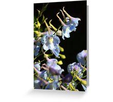 Delphinium ll Greeting Card