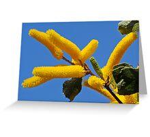 Acacia denticulosa Greeting Card