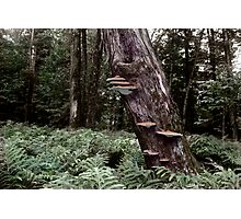 Shelf Fungus at Langdon Park Photographic Print