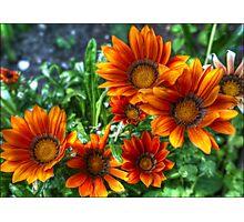 Combat Flowers Photographic Print