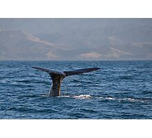 Sperm Whale Photographic Print
