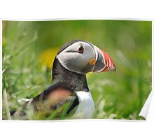 Puffin profile Poster