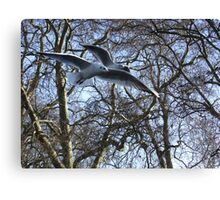 Two seaguls over my head Canvas Print