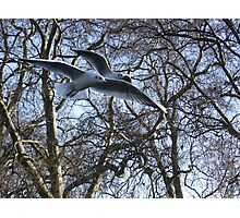 Two seaguls over my head Photographic Print