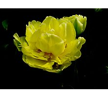 yellow/black Photographic Print