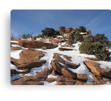 Canyonlands in the Winter Canvas Print