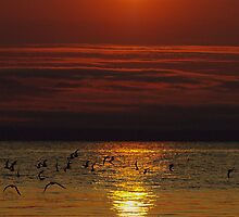 Morning Flock by Al Williscroft