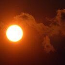 SunBird by Jan Landers