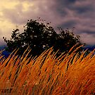 Grasses  Blowing In the wind  by fiat777