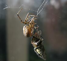 """'""""Will you walk into my parlour?"""" said the Spider to the Fly...' by Innpictime"""