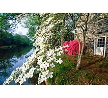 Spring Bloom along the Delaware-Raritan Canal, Photographic Print