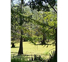 Swamp View Photographic Print