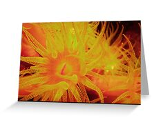 Butter cup Coral Greeting Card
