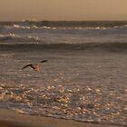 Bird In The Waves by NancyC