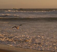 Bird In The Waves by NancyC