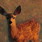 Portrait of a Fawn by Donna Ridgway