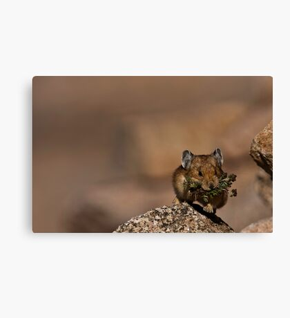 Gather and Store, Gather and Store Canvas Print