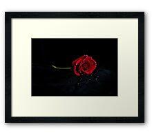 Rose Red Framed Print