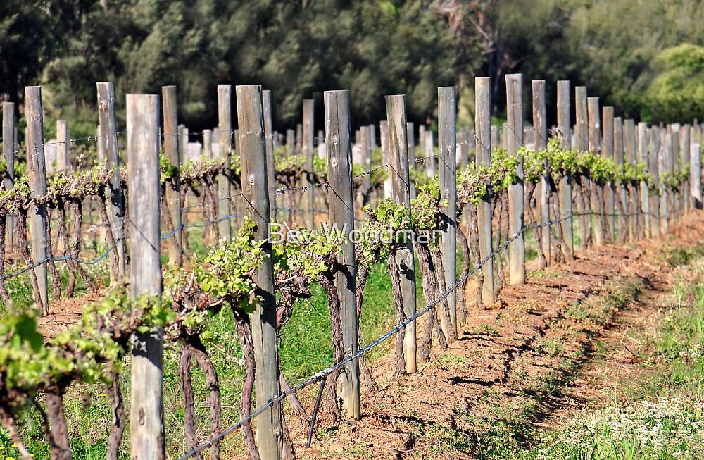 Vineyards - Pokolbin NSW Australia by Bev Woodman