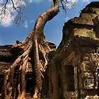 Ta Prohm Strangler Fig - Ta Prohm, Cambodia by Alex Zuccarelli