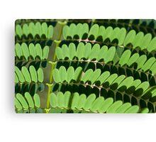 green trend Canvas Print