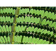 green trend Photographic Print