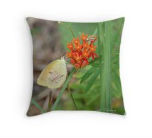 Yellow Sulphur Butterfly on Orange Butterfly Weed Throw Pillow