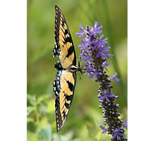 Butterfly in Flight Photographic Print